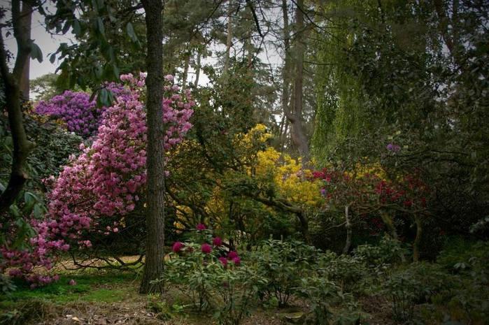 Рододендроновый парк-Westerstede Rhododendronpark. 65268