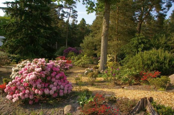 Рододендроновый парк-Westerstede Rhododendronpark. 97070