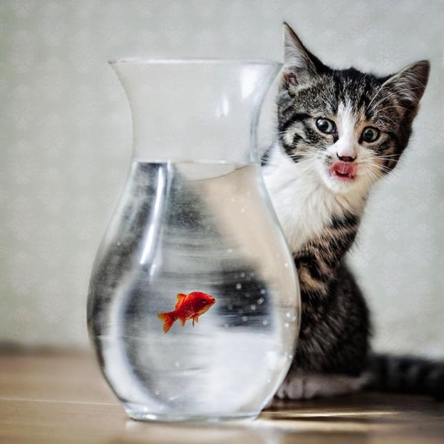 смешные животные фото 2 (640x640, 232Kb)