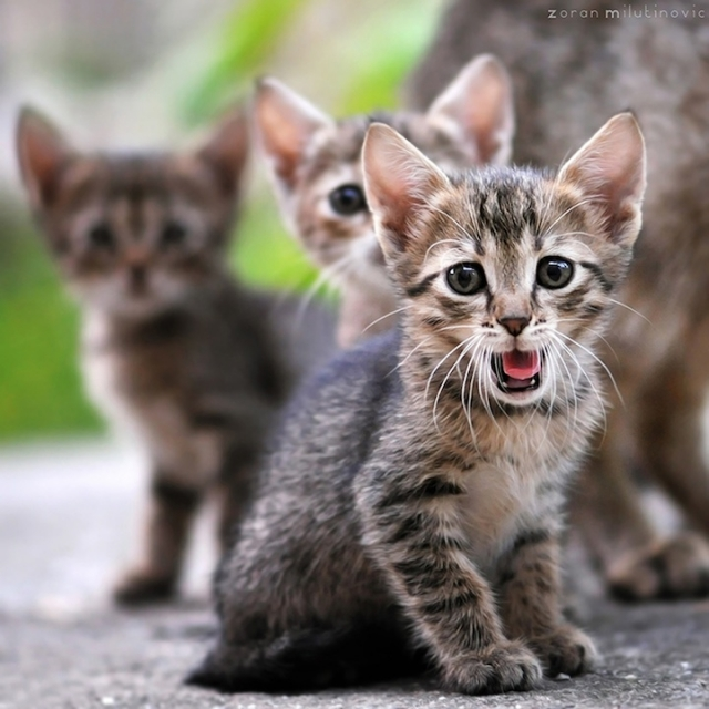 смешные животные фото 9 (640x640, 227Kb)