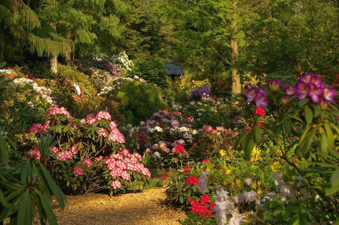 Рододендроновый парк-Westerstede Rhododendronpark. 47383