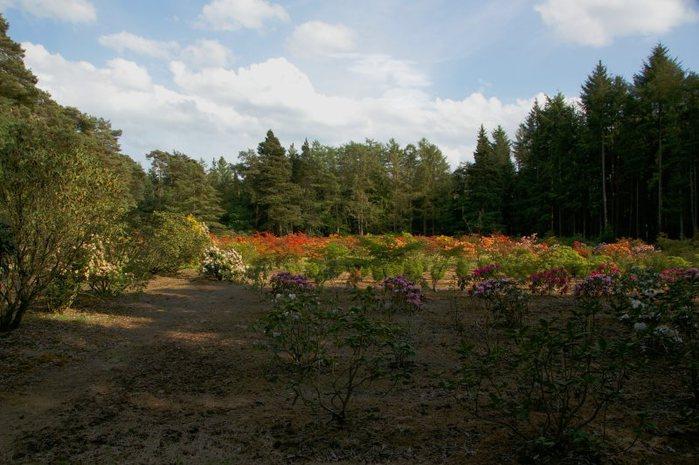 Рододендроновый парк-Westerstede Rhododendronpark. 75271
