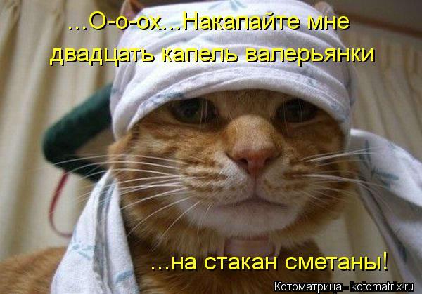 Никакой крыши для коррупционеров не будет, - Порошенко - Цензор.НЕТ 6774