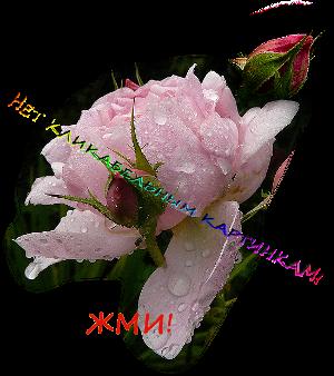 3821971_klikjmijpg_2_ (300x338, 160Kb)