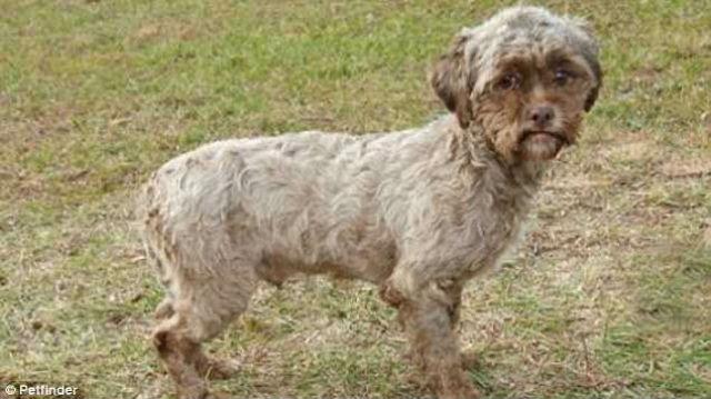 тоник собака с человеческим лицом фото (640x359, 53Kb)