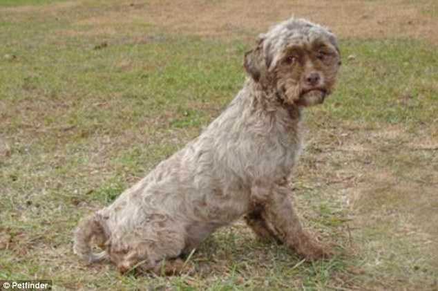 тоник собака с человеческим лицом фото 2 (634x421, 29Kb)