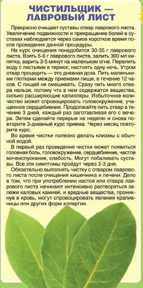 Народный лекарь. Энциклопедия здоровья №16 (225) август 2012 (278x561, 78Kb)