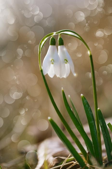 белая весна торрент
