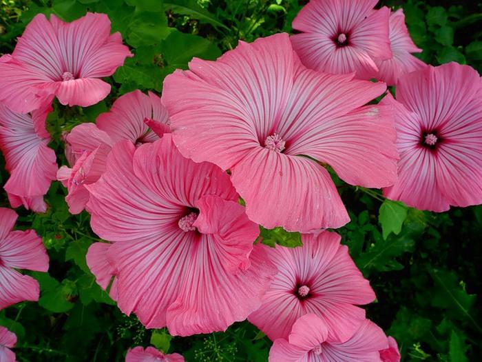 Цветок похожий на маранту