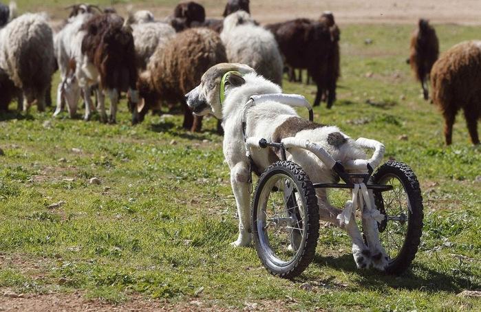 животные инвалиды (700x454, 171Kb)