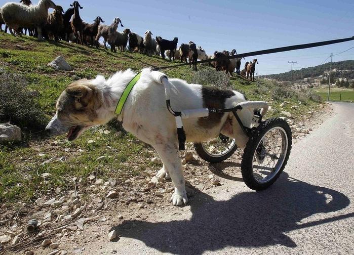 животные инвалиды 4 (700x504, 191Kb)