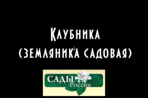 Безымянный23 (612x406, 71Kb)