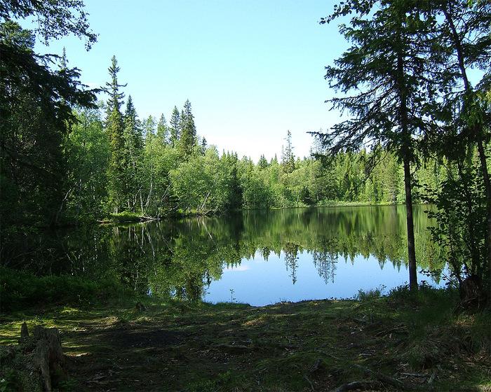 solovki-forest-lake-lesnoe-ozero-1280x1024 (700x560, 253Kb)