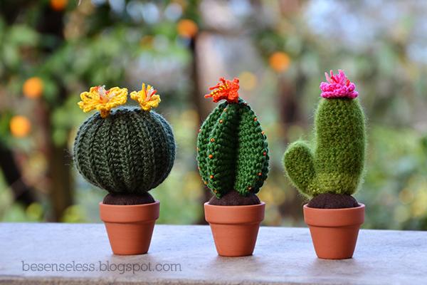 Цветущие кактусы, связанные