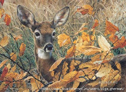 1257955595_brenders-autumn-lady-deer (420x308, 107Kb)