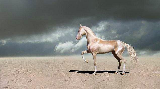 horse-izobel-19 (636x353, 40Kb)