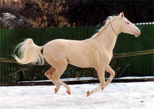 horse-izobel-14 (500x354, 37Kb)