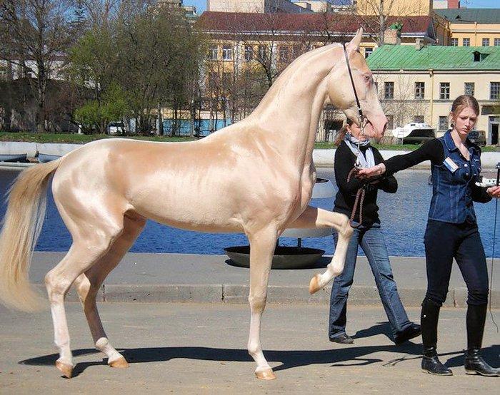 horse-izobel-01 (700x554, 110Kb)