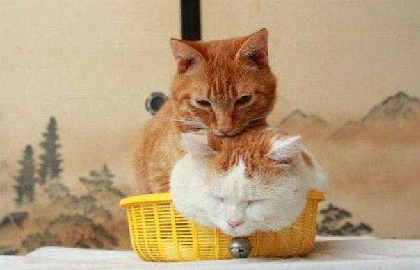 смешные фото кошек 2 (604x389, 35Kb)