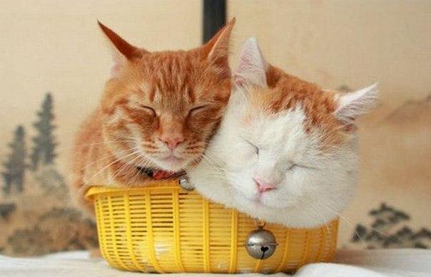 смешные фото кошек 3 (604x389, 41Kb)