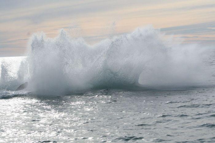 кит налетел на лодку фото 5 (700x467, 42Kb)