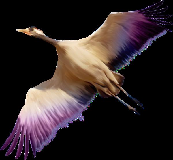 Птички - Животный мир - Клипарты PNG - Клипарты у Анны.