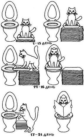 Как приучить кота к унитазу за