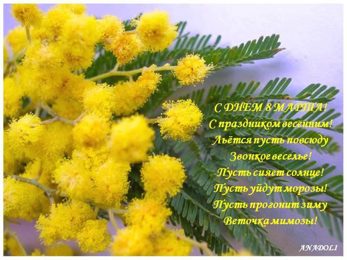http://img0.liveinternet.ru/images/attach/c/7/98/213/98213468_large_84465778_8_marta_mimoza.jpg