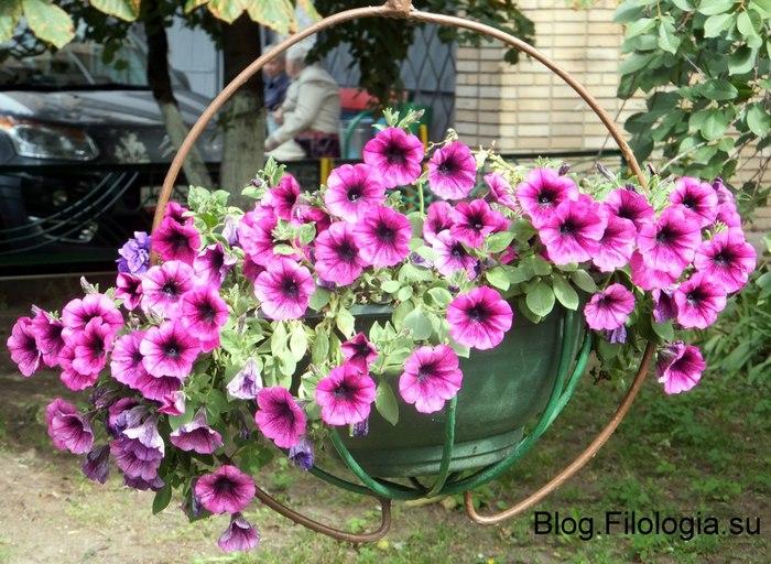 Цветы в городе. Корзинка с цветами/3241858_Zverty10 (700x512, 121Kb)