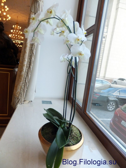 Белые цветы на окне/3241858_Zverty13 (525x700, 235Kb)