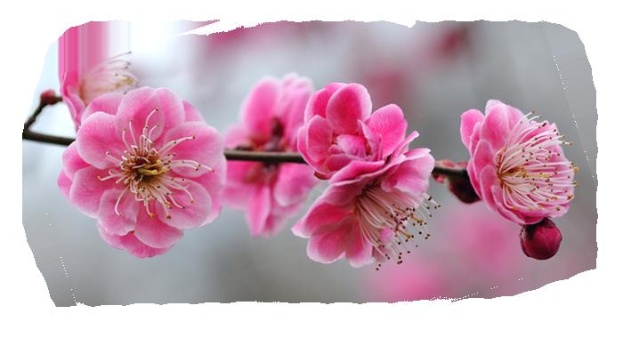 весеннее цветение/4348076_5 (700x380, 351Kb)