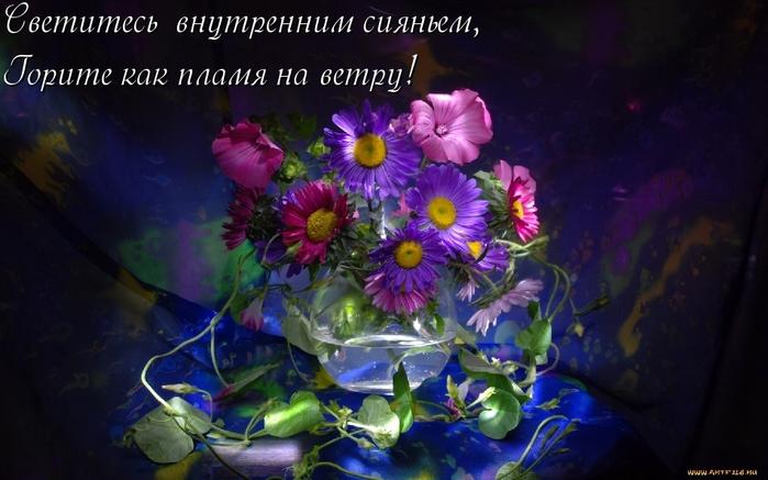 цветы, растения, Скачать Обои и Фо…