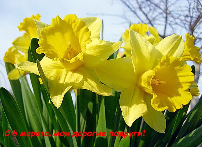 поздравления с 8 марта/4552399_ (700x507, 175Kb)