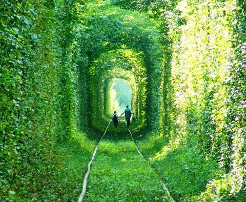 Тоннель любви, Клевань, Украина (480x394, 85Kb)