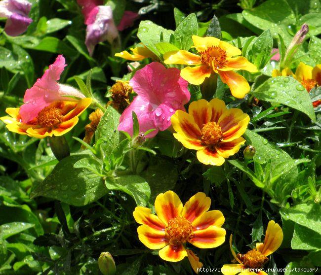 Цветы/1362770394_IMG_0727 (650x558, 261Kb)