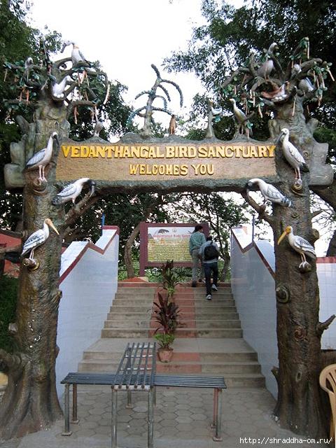 Индия, штат Тамилнад, Птичий заповедник, 1 (480x640, 331Kb)