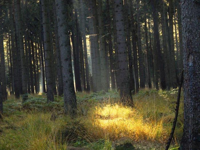 солнечный луч в лесу 24.10.06 (700x525, 74Kb)