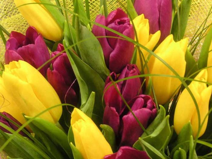 тюльпаны1 (700x525, 85Kb)