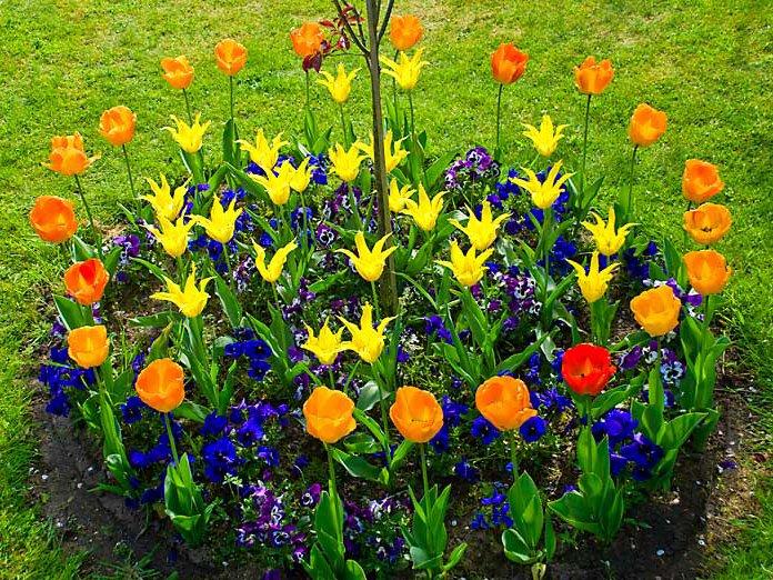 К чему снится сажать цветы на клумбе 24