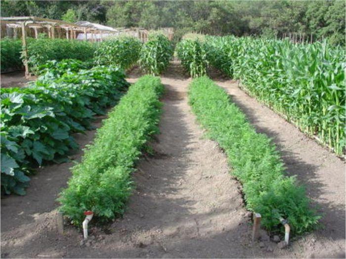 Одно из крупнейших овощеводческих хозяйств Сахи оказалось на грани банкротства