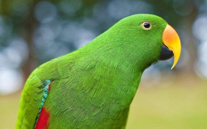В Керчи с выставки Чудеса природы улетел попугай Рома - гордость