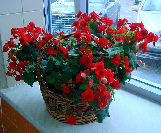 Цветы комнатные   Записи в