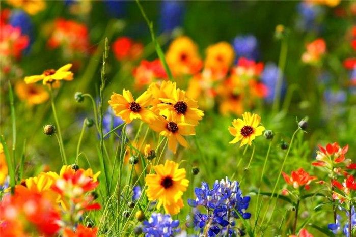Цветочные фотографии