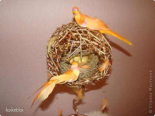 топиарии птичьи гнезда (2) (520x390, 53Kb)