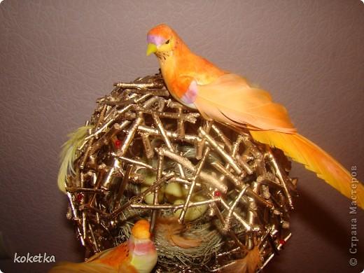 топиарии птичьи гнезда (4) (520x390, 63Kb)