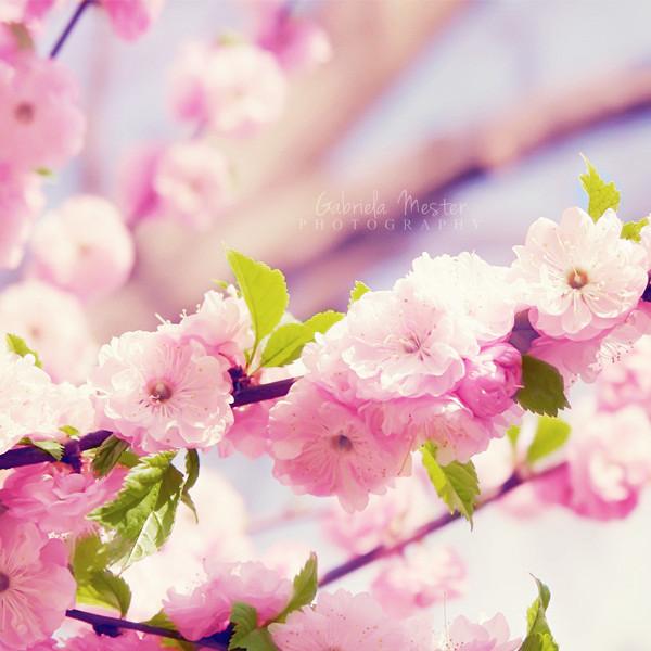 3303834_spring_pink_8 (600x600, 97Kb)
