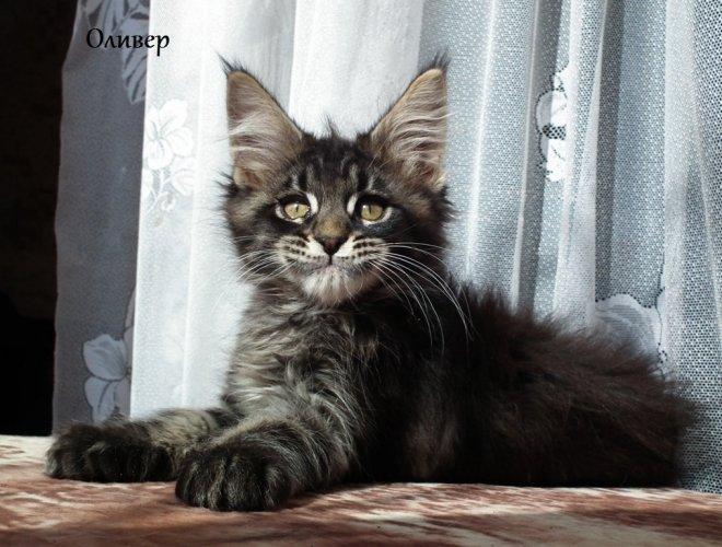 как познакомить кота и кошку при вязке