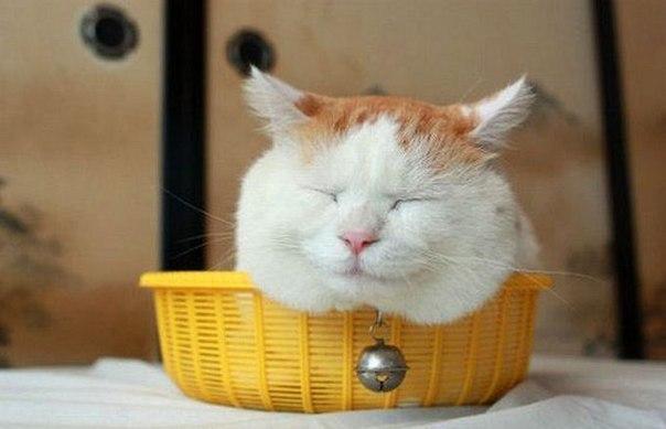 смешные коты фото 1 (604x389, 34Kb)