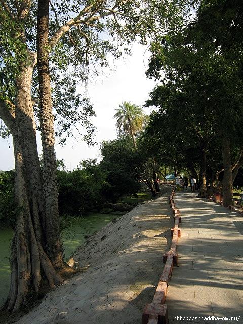 Индия, штат Тамилнад, Птичий заповедник, 21 (480x640, 331Kb)
