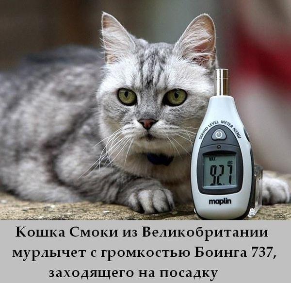 1331925253__fakti_07 (600x583, 60Kb)